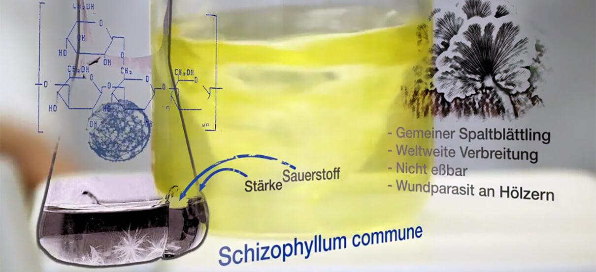 Im Hintergrund ist ein Glas mit Nährlösung zu sehen dort wächst der Pilz Schizophyllum commune der die Erdölförderung umweltfreundlicher machen soll. Erklärfilm über die Wissenschaft die hinter der neuen Methode steckt. Den Film hat die Filmproduktion Karlsruhe mp-film produziert.